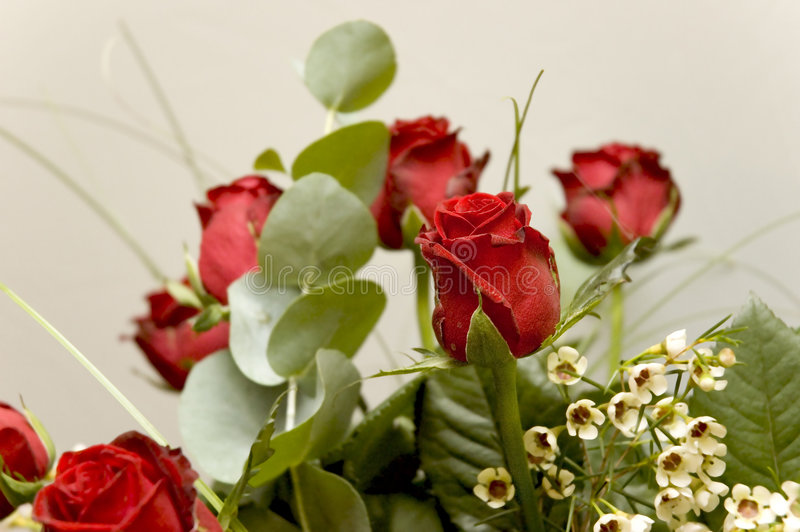 10 kwiatów zdjęcie stock