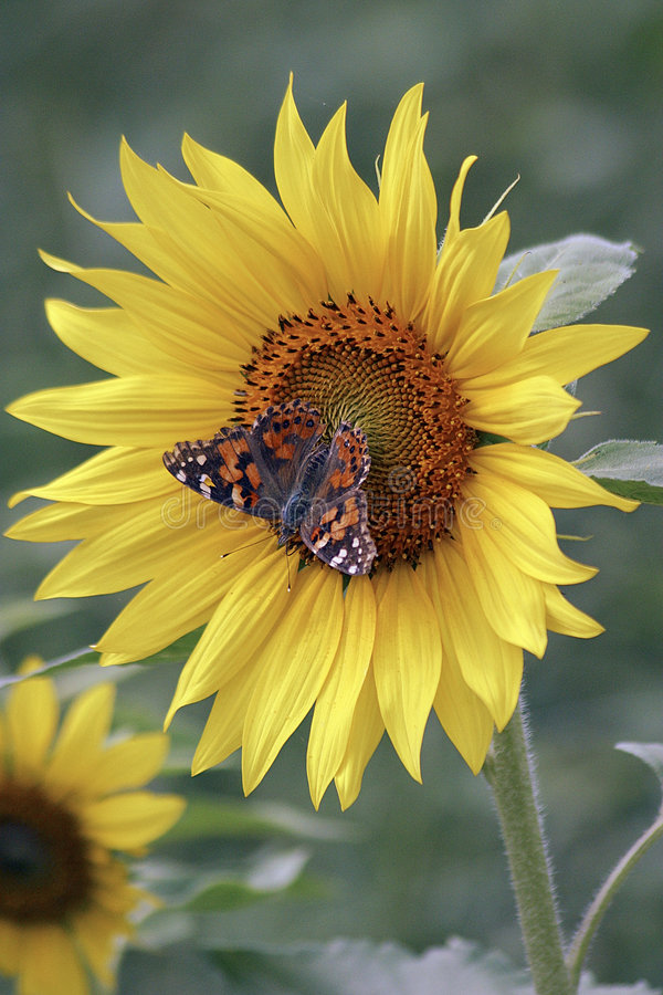 10 motyl obrazy stock