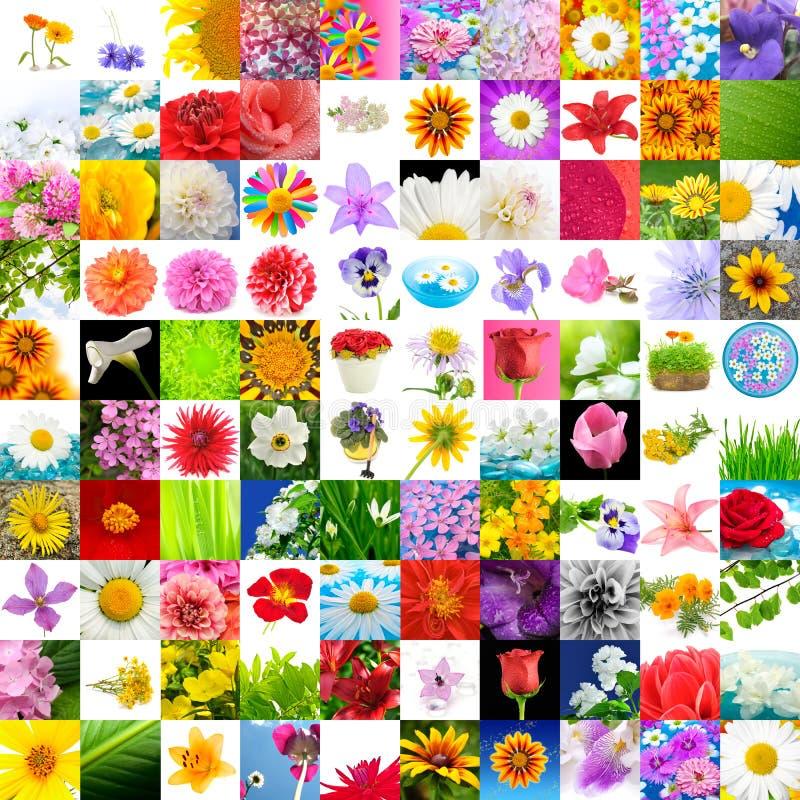 100 μεγάλες εικόνες λουλουδιών συλλογής που τίθενται στοκ εικόνα με δικαίωμα ελεύθερης χρήσης