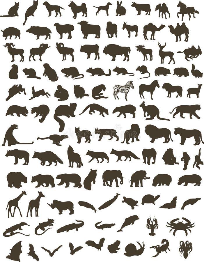 100 animais ilustração royalty free