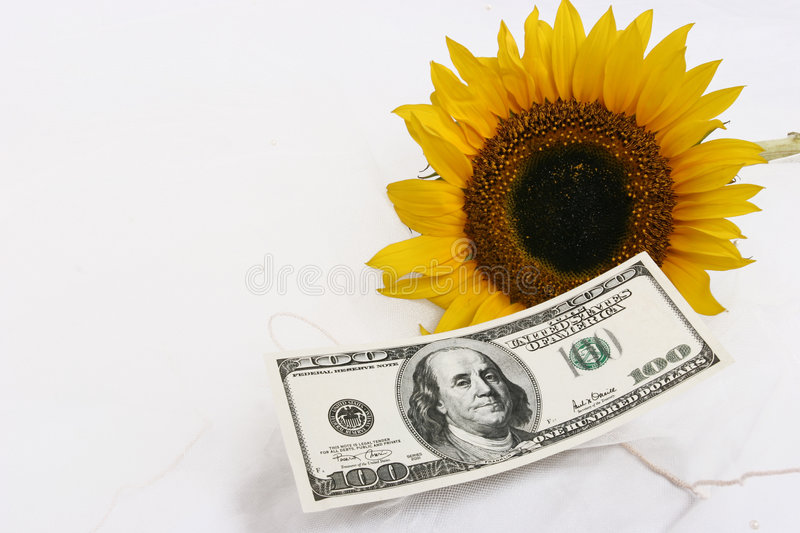 $100 bill and a yellow sunflower stock photo