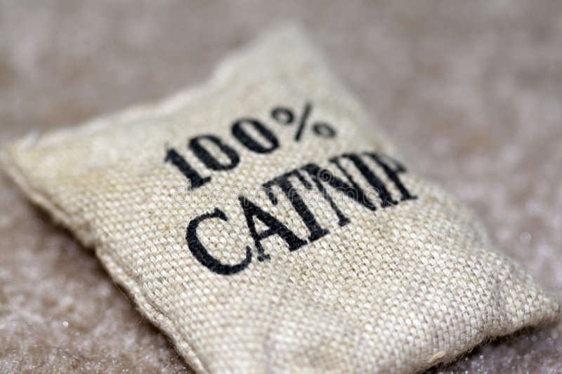 Download 100% Catnip Bag stock photo. Image of carpet, burlap, catnip - 380636