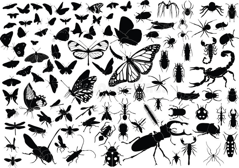 100 insects. 100 vector silhouettes of insects (butterflies, bugs, flies, bees ets stock illustration