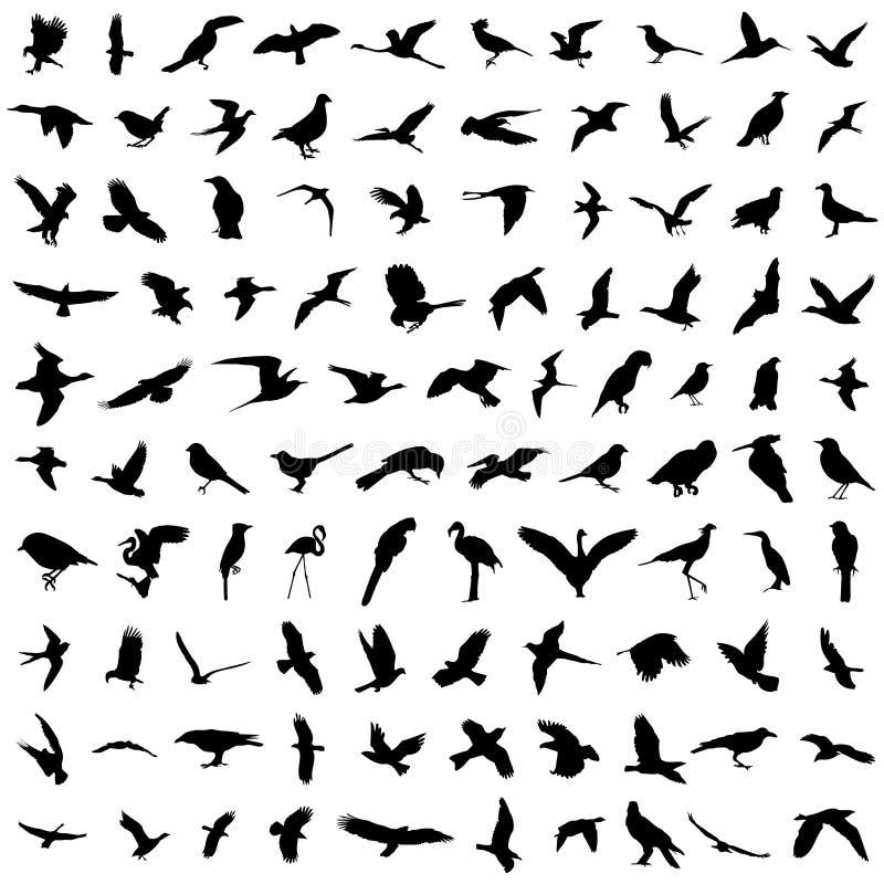 100 ptaków ilustracji