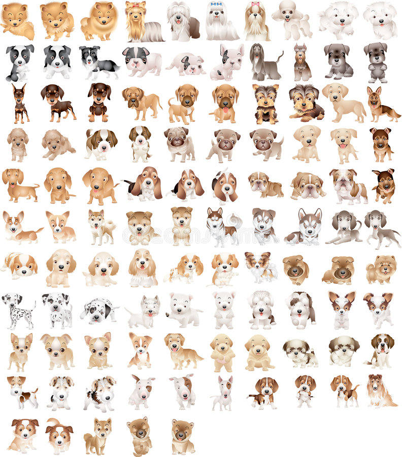 105 dogs stock photos