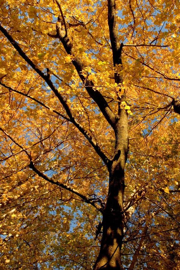11个颜色黄柏榆木秋天树丛 库存图片