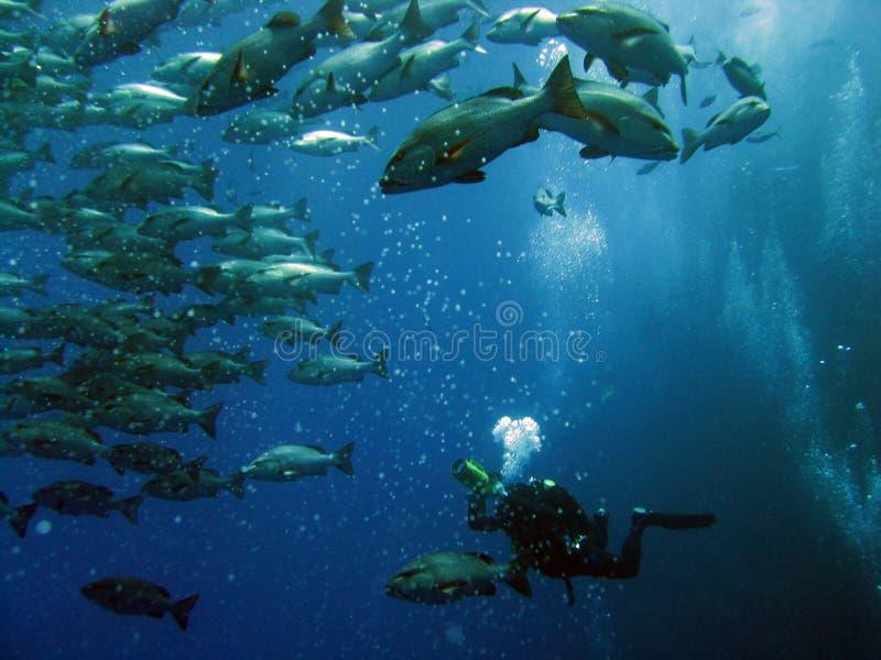 11水下 图库摄影