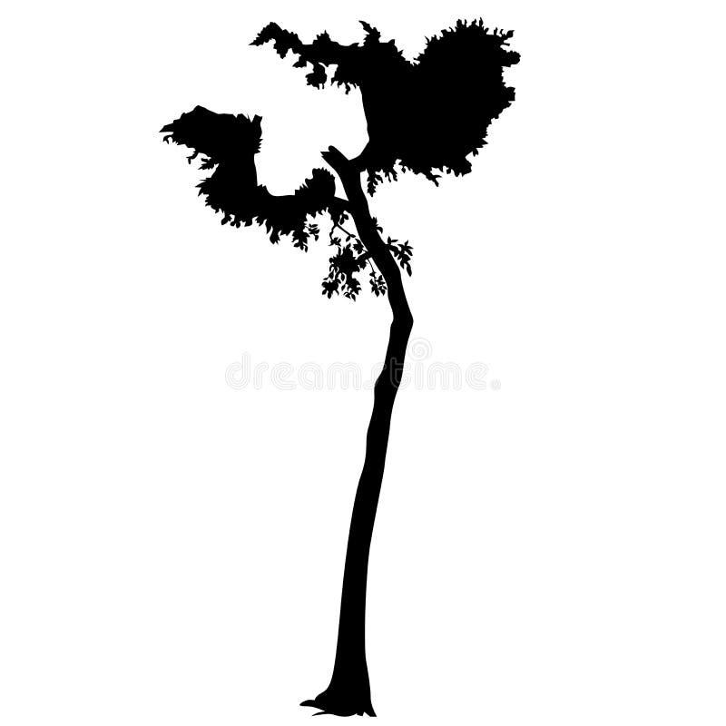 11 sylwetki drzewo ilustracji