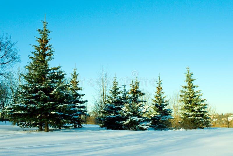 12月冷杉雪结构树 免版税图库摄影