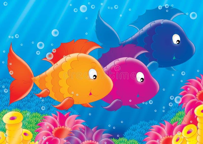 Download 12礁石 库存例证. 插画 包括有 子项, 海洋, 水下, 海运, 例证, 世界, 安卡拉, 珊瑚, 礁石 - 188985
