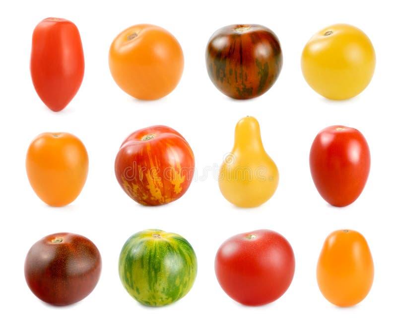 12 sortes diferentes dos tomates sobre o branco imagem de stock royalty free