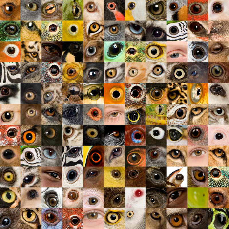 121 animal and human eyes. Patchwork of 121 animal and human eyes