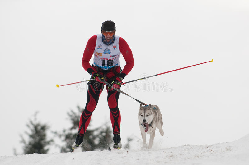 12th European sleddog racing Championship Slovakia stock images