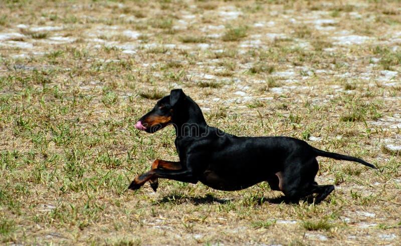 13 собаки Стоковая Фотография