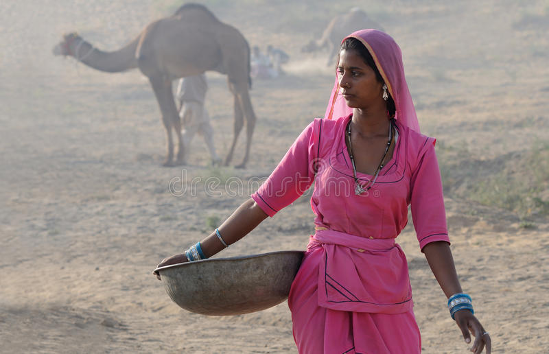 13 kamel puskar ganska november royaltyfri foto