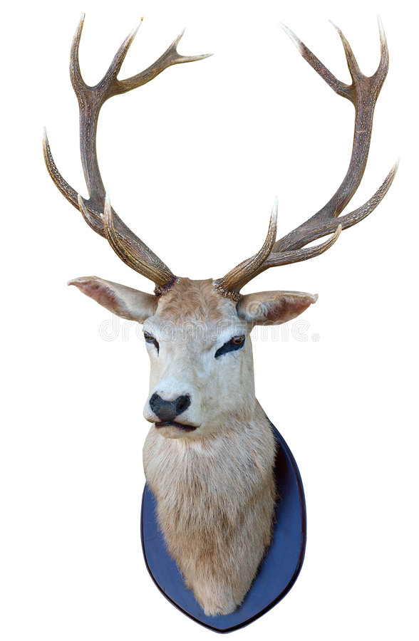 Download 13 Point Deer Head stock image. Image of majestic, mount - 9242303