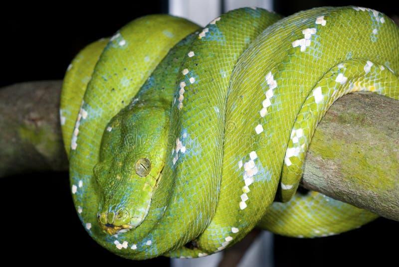 15蛇 库存图片