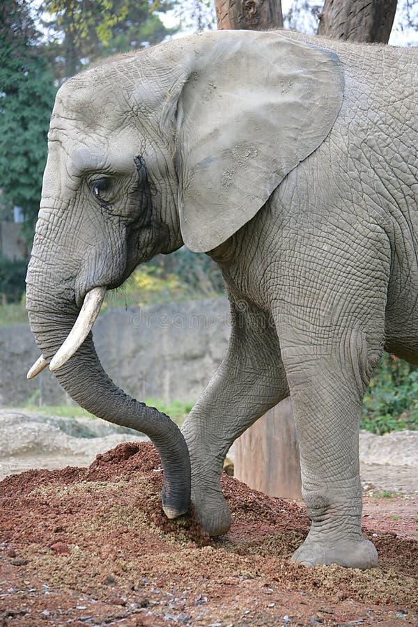 15 słonia obrazy stock