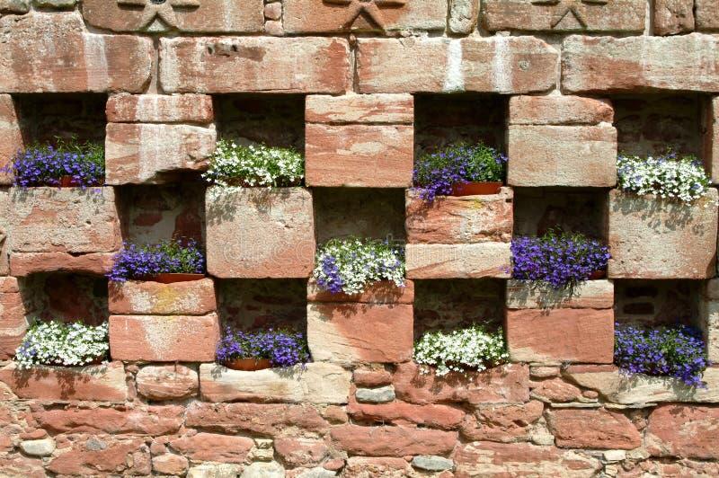 16th Century Garden, Edzell Castle, Scotland stock images