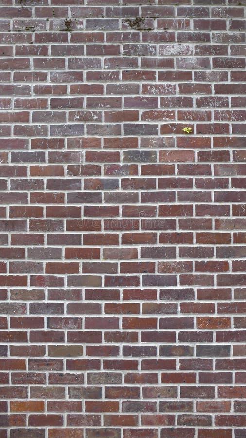 16x9 Brick Wall Background @ 10MP Stock Photos