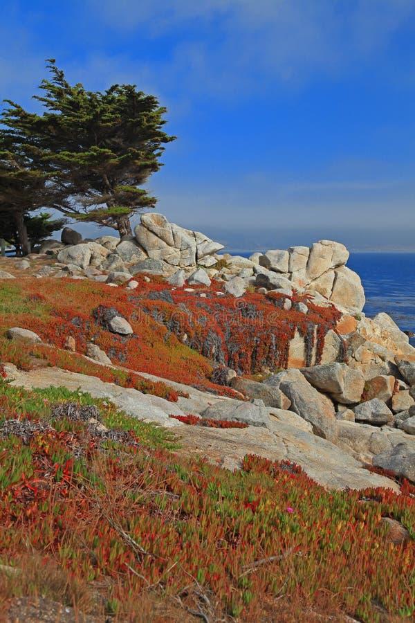 17 миль Монтерей ландшафта привода california стоковые фото