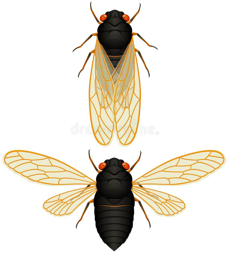 Free 17-Year Cicada Top View Stock Image - 190177751