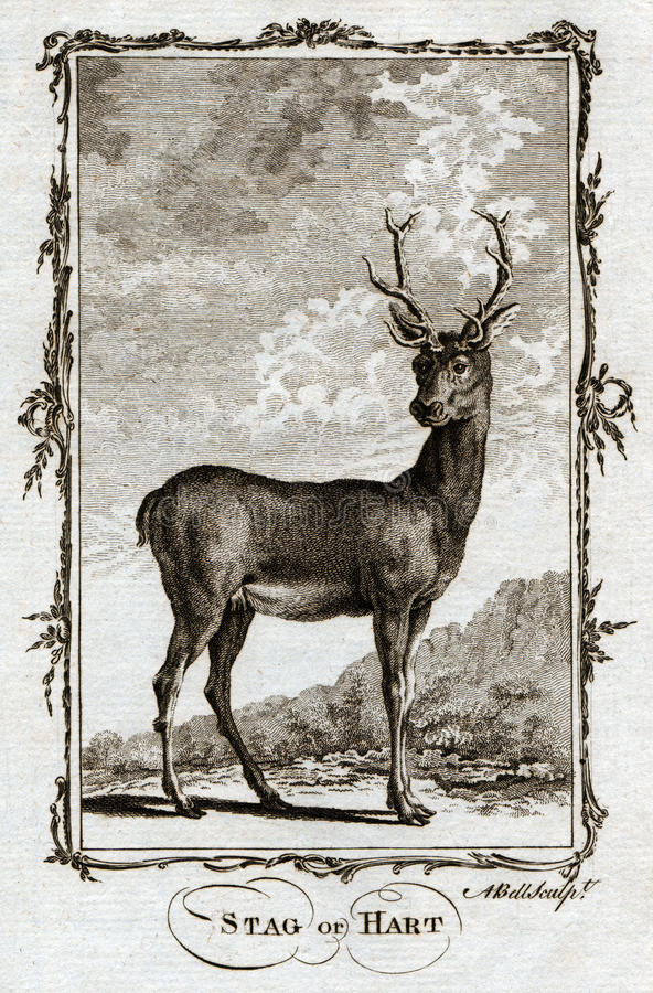 Free 1770 Buffon Antique Animal Print Of A Stag Or Hart Deer Royalty Free Stock Photos - 96600508