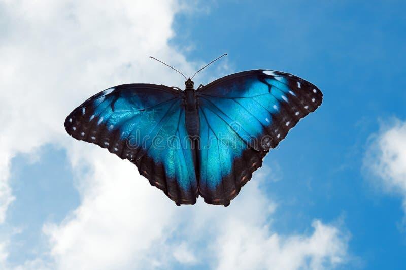 18蝴蝶 库存图片