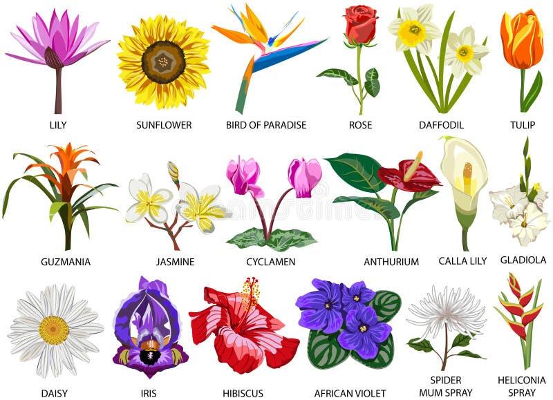 18 species van kleurrijke bloemen stock illustratie