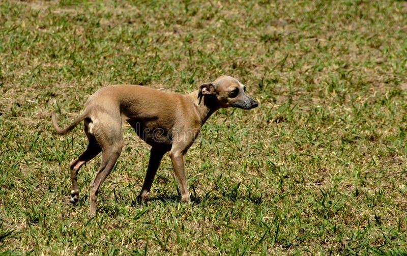 19条狗 库存照片