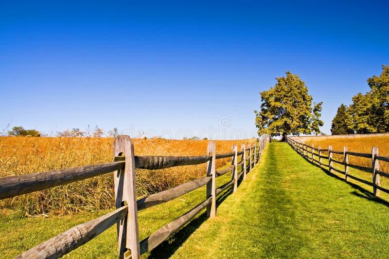 2个下午秋天象草的运输路线 库存照片