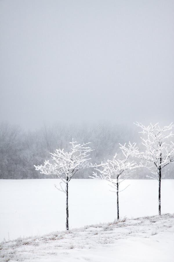 2个早晨多雪的结构树 免版税库存照片