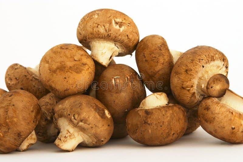 2个栗子蘑菇 库存照片