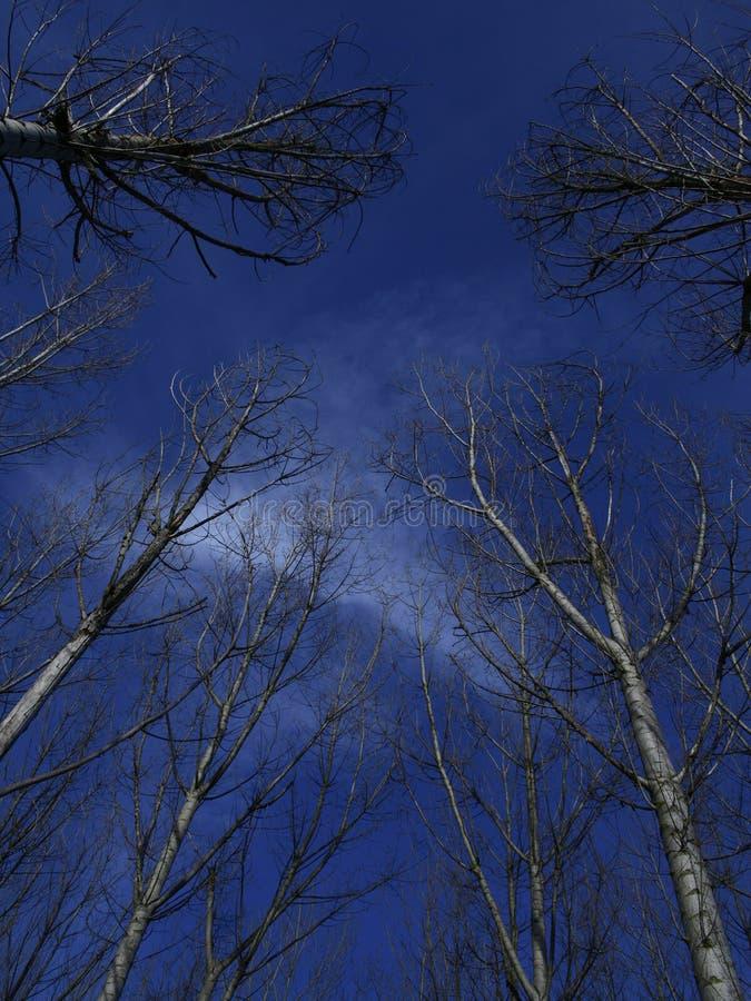 2个结构树 免版税库存图片