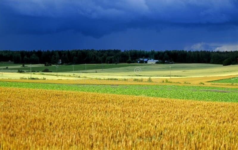 2农田完成没有 库存图片