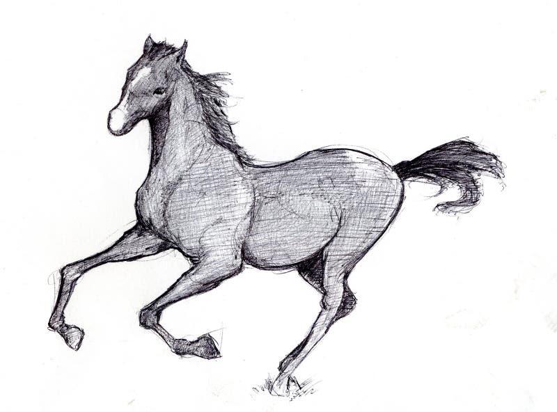 2匹马草图 免版税图库摄影
