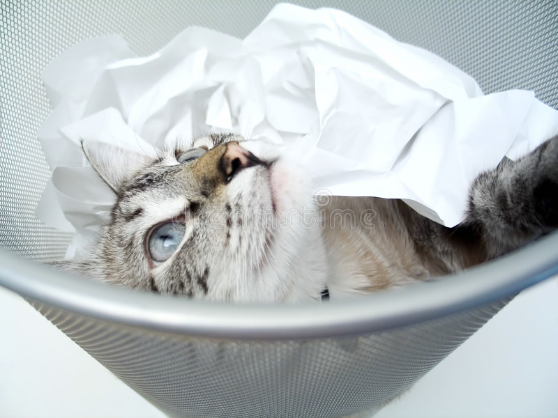 2只猫作用 免版税图库摄影