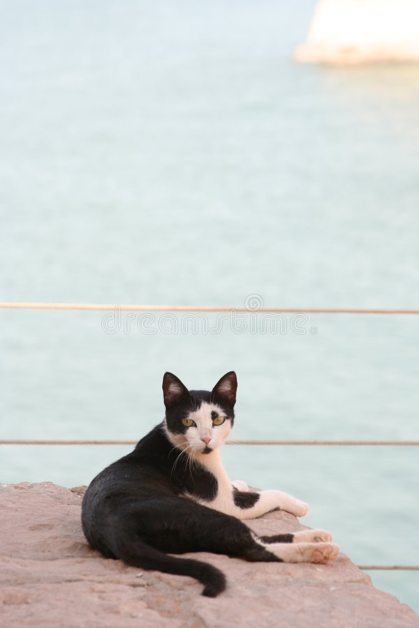 2只猫红海凝视 库存照片