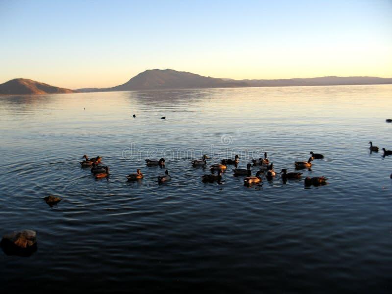 2只鸭子海滨 库存图片