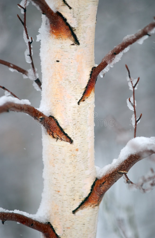 2吠声冬天 免版税库存图片