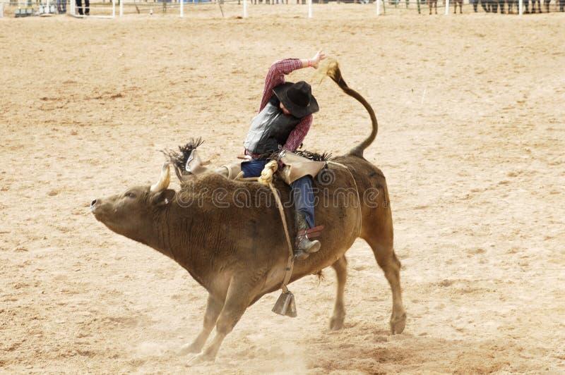 2头公牛骑马 库存照片
