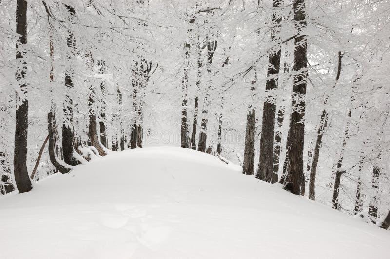 2座山雪结构树 库存照片