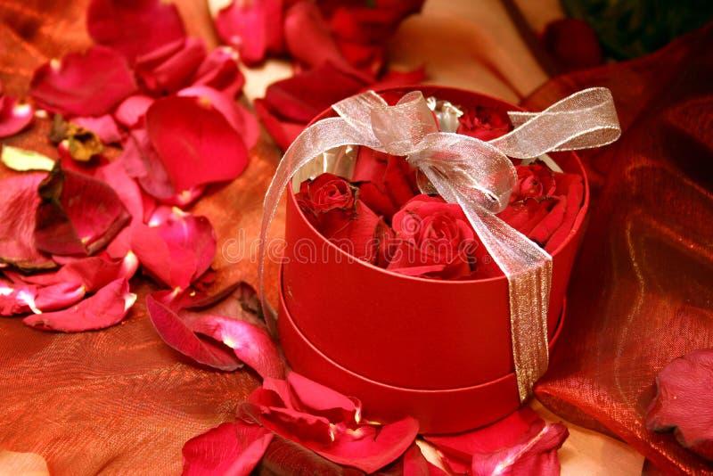 2把红色玫瑰装箱 免版税库存图片