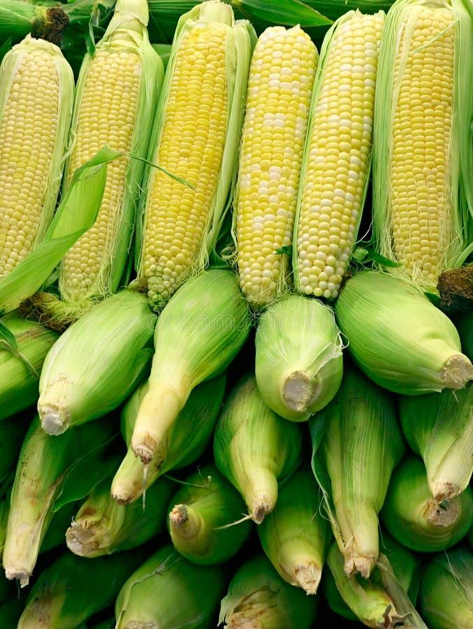2排列玉米 库存照片