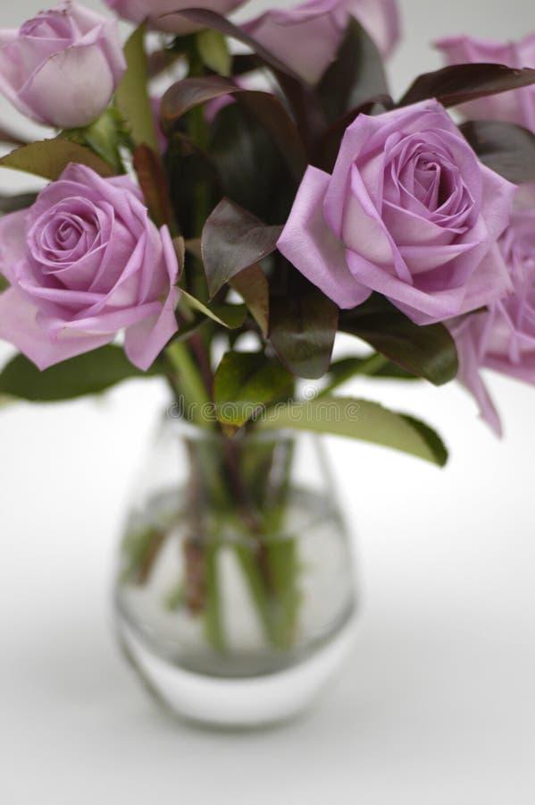 2朵喜怒无常的桃红色玫瑰花瓶 库存图片