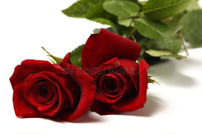 2朵红色玫瑰二 免版税图库摄影