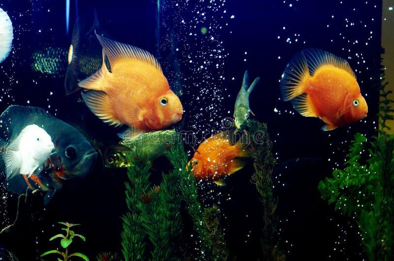 2条鱼 免版税库存照片