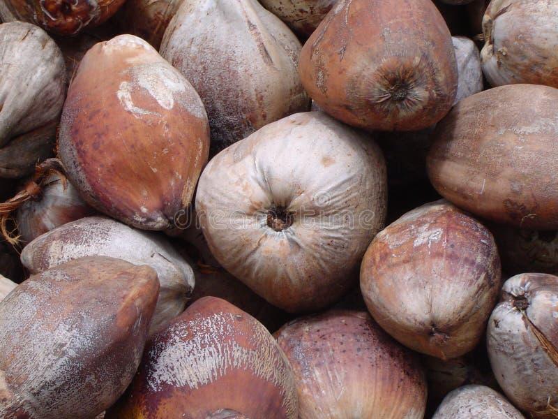 2椰子自然纯 免版税库存照片
