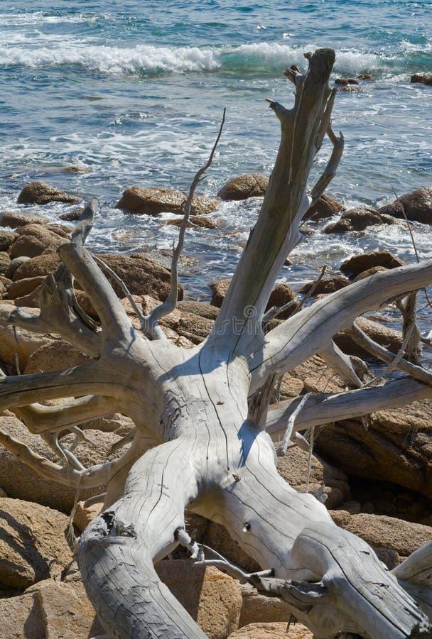 2死海结构树 免版税库存图片