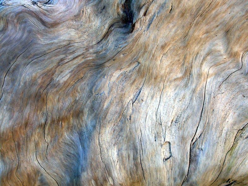2漂流木头纹理 免版税库存图片